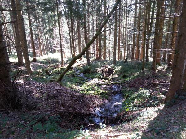 Nahe der Schwarzenbachtalsperre
